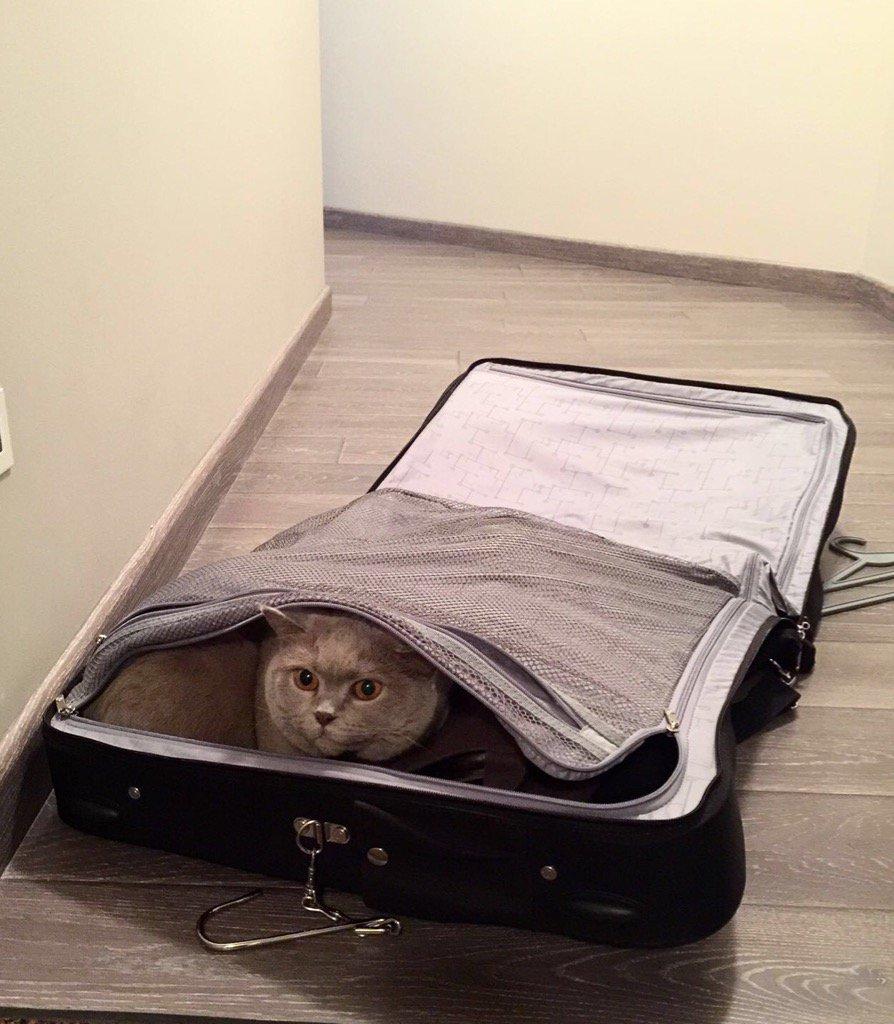 Кошка Святослава Вакарчук