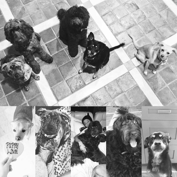 модные породы собак