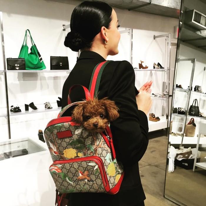Кэти Перри с щенком