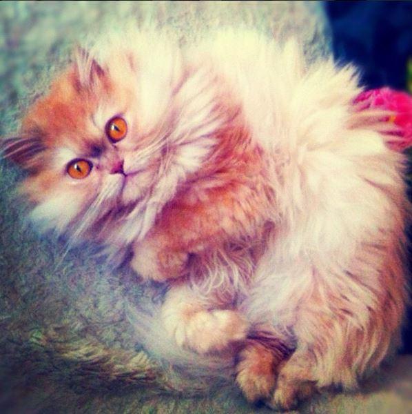 Кошка Виталия Козловского