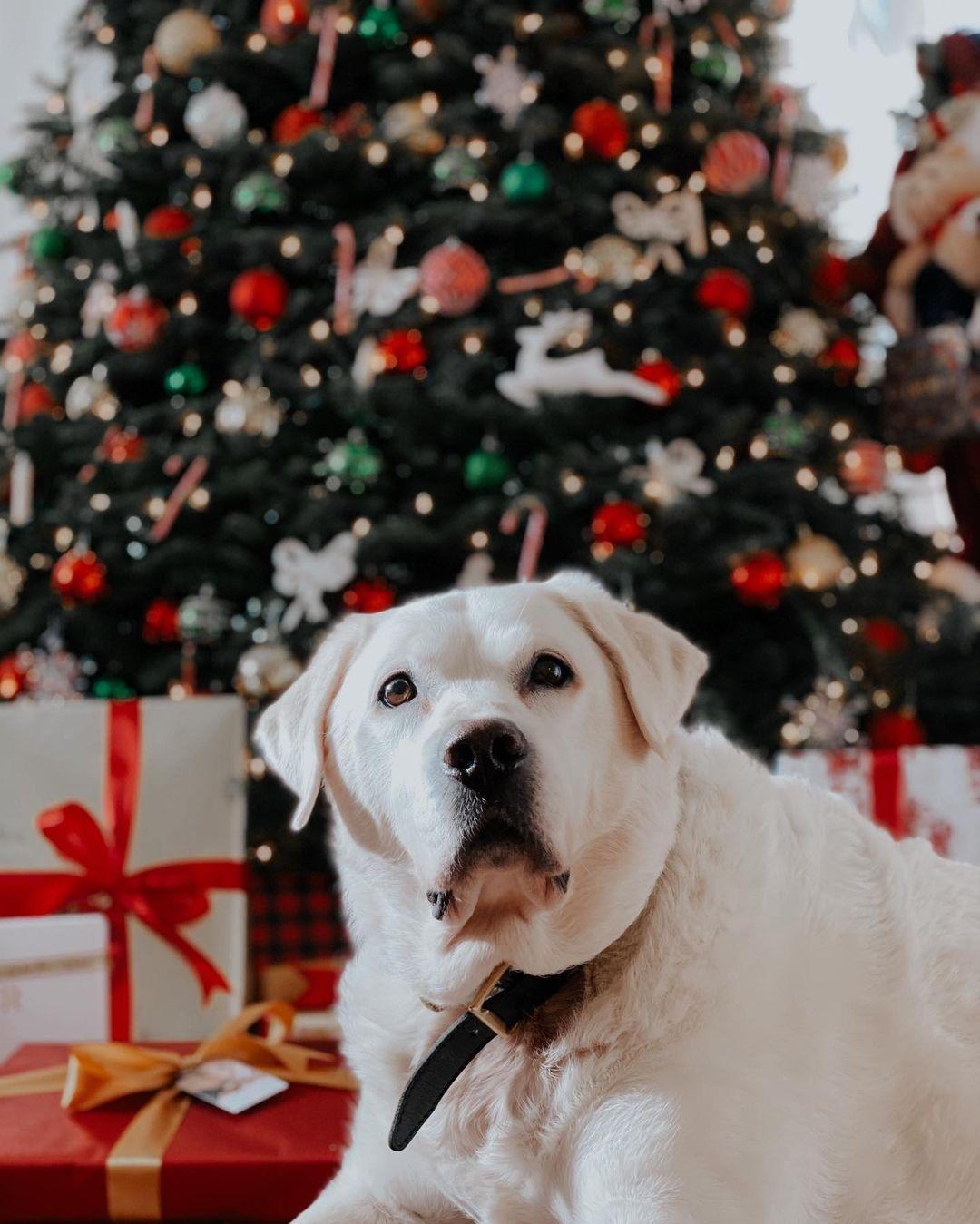 мика ньютон рождество елка новый год 2021