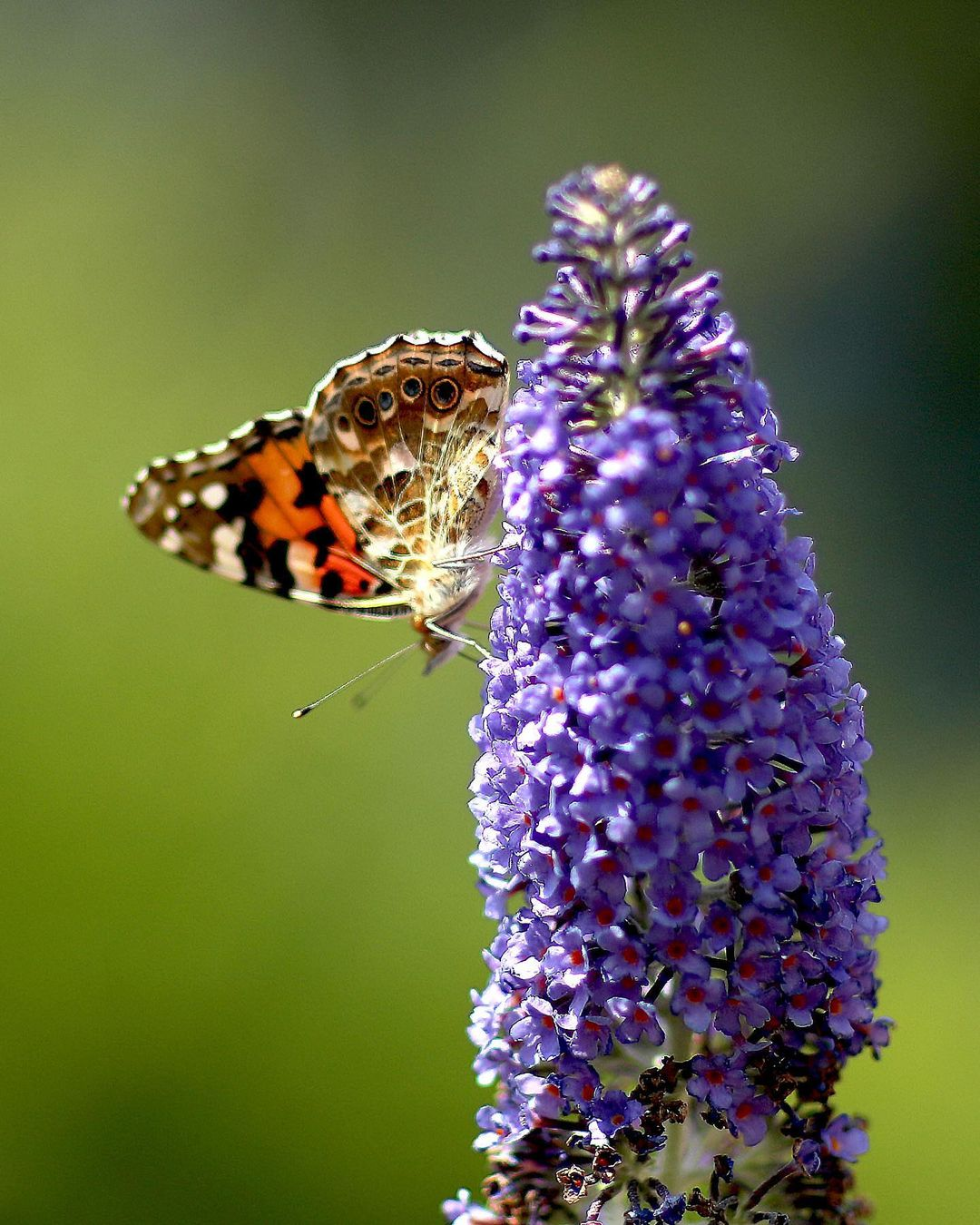 принцесса шарлотта 6 лет свежее фото бабочки в саду